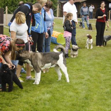 dog show 039