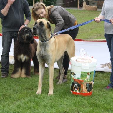 dog show 061