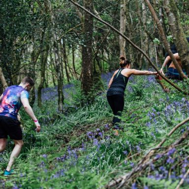 Hill climb bluebells
