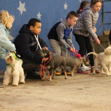 Best Under 12 handlers line up