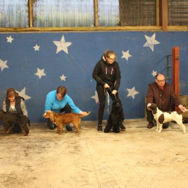 Best Working dogs line up