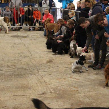 Best gun dogs line up 2