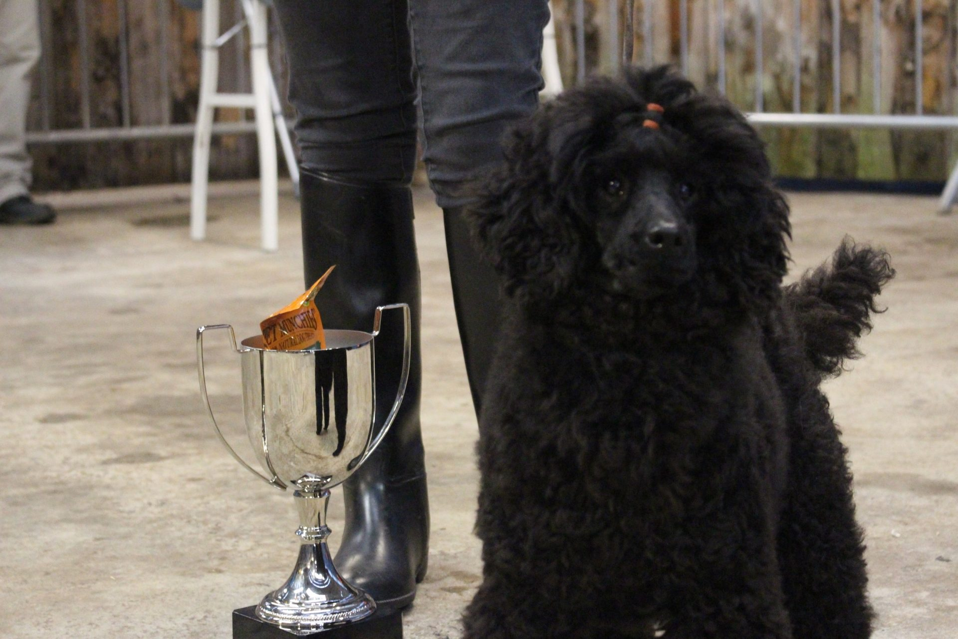 Best in Show   Tilly