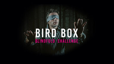 Bird Box Website Banner v2
