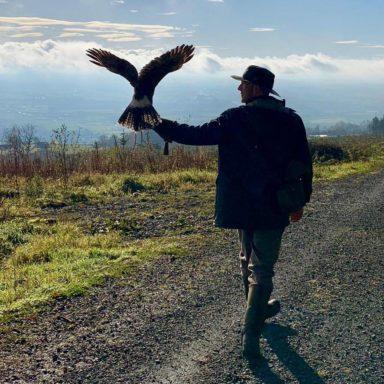 Hawk D