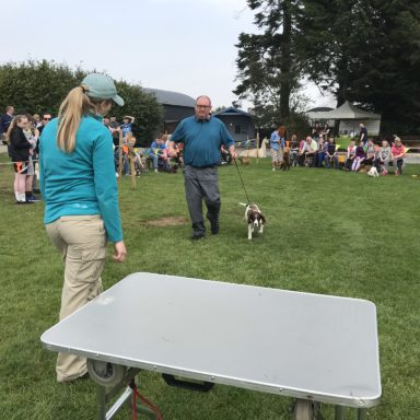 Gun Dog   judging Bella 2