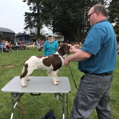 Gun Dog   judging Bella
